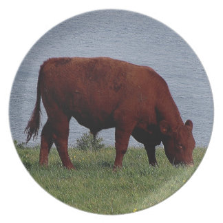 South Devon Ruby Red Cow Grazeing On Coastline Plate