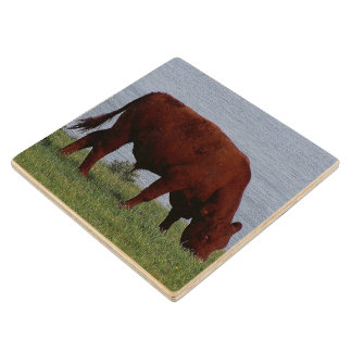 South Devon Ruby Red Cow Grazing On Coastline Wood Coaster