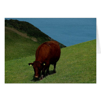 South Devon Ruby Red Cow In Coastline Pasture. Card