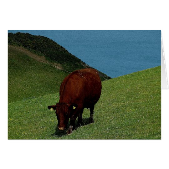 South Devon Ruby Red Cow In Coastline Pasture.