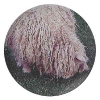South Devon Scruffy Long Sheep Grazeing Plate