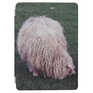South Devon Scruffy Long Wool Sheep Grazing iPad Air Cover