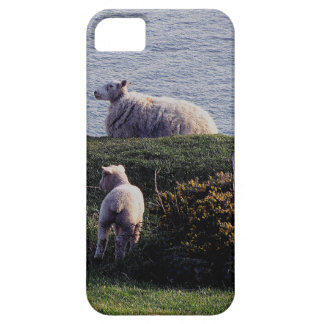 South Devon Sheep And Lamb On Remote Coastline Case For The iPhone 5