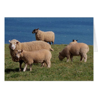 South Devon Sheep And Lambs Grazeing On Coastline Card