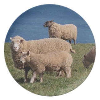 South Devon Sheep And Lambs Grazeing On Coastline Plate