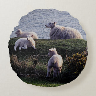 South Devon Sheep And Lambs On Remote Coastline Round Cushion