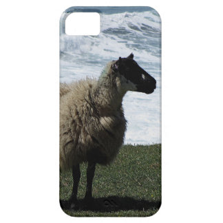 South Devon Sheep On Wild Coastline iPhone 5 Covers