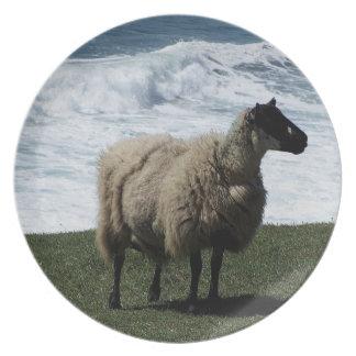 South Devon Sheep On Wild Coastline Plate