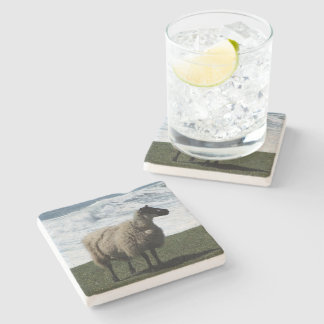 South Devon Sheep On Wild Coastline Stone Coaster