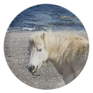 South Devon Shetland Pony Enjoying Beach Plate