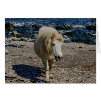 South Devon Shetland Pony Walking On Remote Beach Card