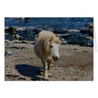 South Devon Shetland Pony Walking On Remote Beach Greeting Card