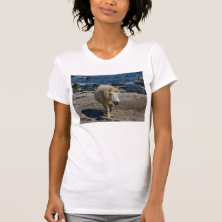 South Devon Shetland Pony Walking On Remote Beach T-Shirt