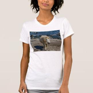 South Devon Shetland Pony Walking On Remote Beach T-Shirt