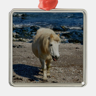 South Devon Shetland Walking On Remote Beach Christmas Ornament