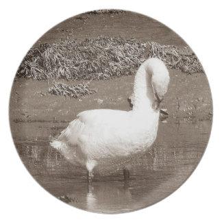 South Devon Swan Standing Estury Low Tide Plate