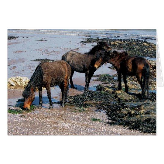 South Devon Three Dartmoor Ponies On Remote Beach Card