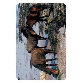 South Devon Threee Dartmoor Ponies On Remote Beach Magnet