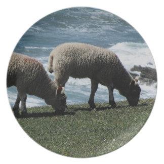 South Devon Two Lambs Grazeing On Wild Coastline Plate