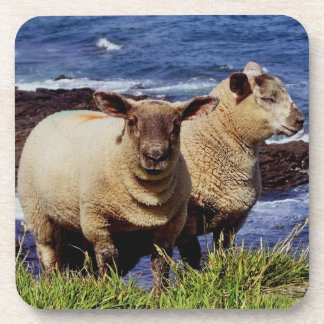 South Devon Two Lambs On Coast Path On Cliff Edge Coaster