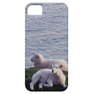 South Devon Two Lambs Resting On Remote Coastline iPhone 5 Cover