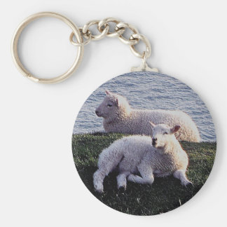 South Devon Two Lambs Resting On Remote Coastline Key Ring