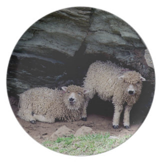 South Devon Two Long Wool Lambs Sheltering Plate