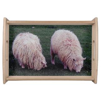 South Devon Two Long Wool Sheep Grazing Serving Tray