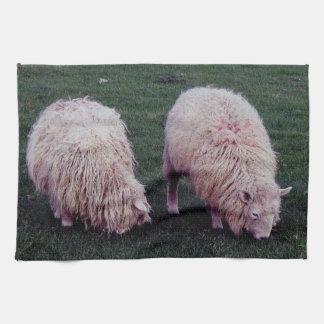 South Devon Two Longwool Sheep Grazeing Tea Towel