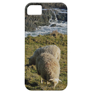 South Devon Two Sheep Grazeing On Wild Coastline iPhone 5 Case