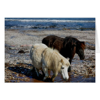 South Devon Two Shetland Ponies On Remote Beach Card