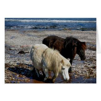 South Devon Two Shetland Ponies On Remote Beach Greeting Card