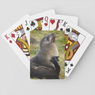 South Georgia. Antarctic fur seal 1 Playing Cards