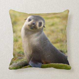 South Georgia. Antarctic fur seal 2 Cushion