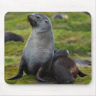South Georgia. Antarctic fur seal 4 Mouse Mat