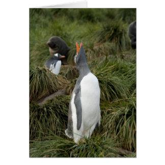 South Georgia Island, Godthul. Gentoo penguin Card