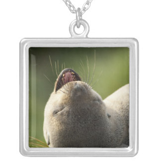 South Georgia Island, Godthul. Young Antarctic Silver Plated Necklace