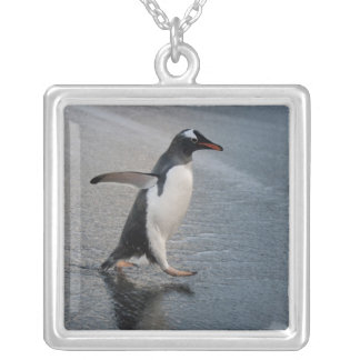 South Georgia Island, Gold Harbor. Gentoo Silver Plated Necklace