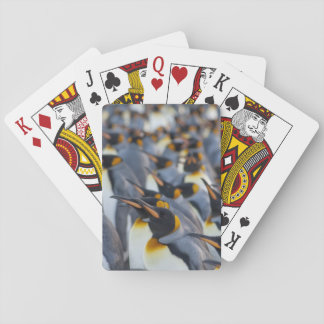 South Georgia Island, Gold Harbor. King 2 Playing Cards