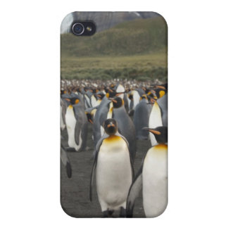South Georgia Island, Gold Harbor. King penguin 2 Cover For iPhone 4