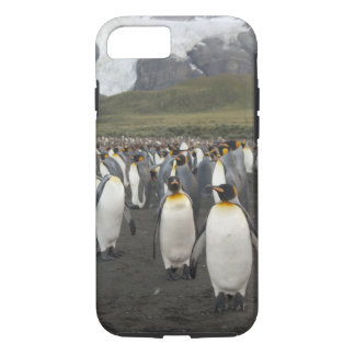 South Georgia Island, Gold Harbor. King penguin 2 iPhone 8/7 Case