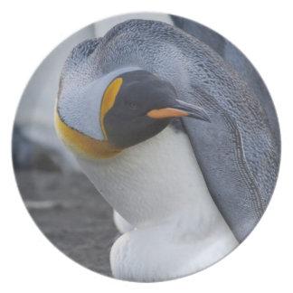 South Georgia Island, Gold Harbor. King penguin 3 Party Plates