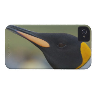 South Georgia Island, Gold Harbor. King penguin 4 iPhone 4 Cases