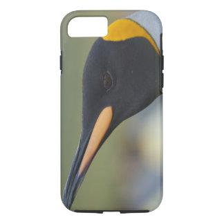 South Georgia Island, Gold Harbor. King penguin 4 iPhone 8/7 Case
