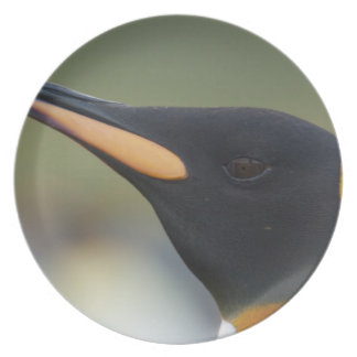 South Georgia Island, Gold Harbor. King penguin 4 Party Plate