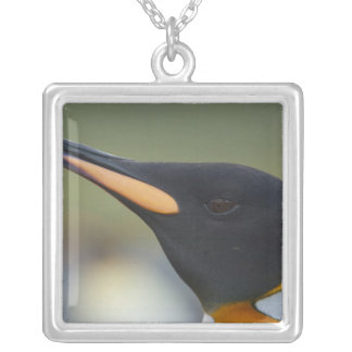 South Georgia Island, Gold Harbor. King penguin 4 Silver Plated Necklace