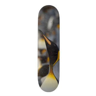 South Georgia Island, Salisbury Plain. Second Skate Board Deck