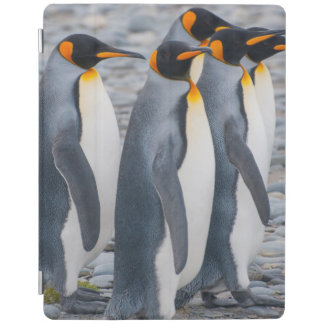 South Georgia. King penguins iPad Cover