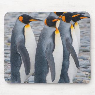 South Georgia. King penguins Mouse Mat