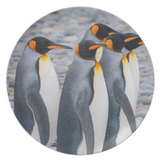 South Georgia. King penguins Party Plates